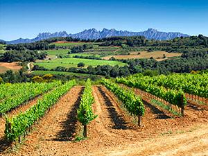 Les terres d'on surten aquests grans vins!
